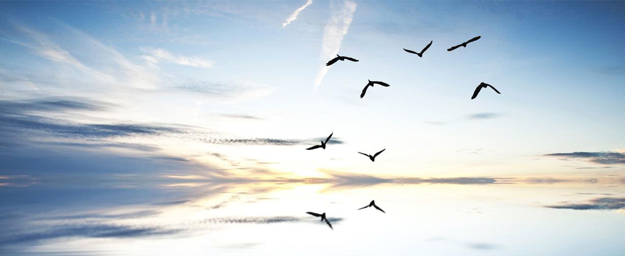 Schweigemeditation Kontemplation, Meditations- und Zenkurse